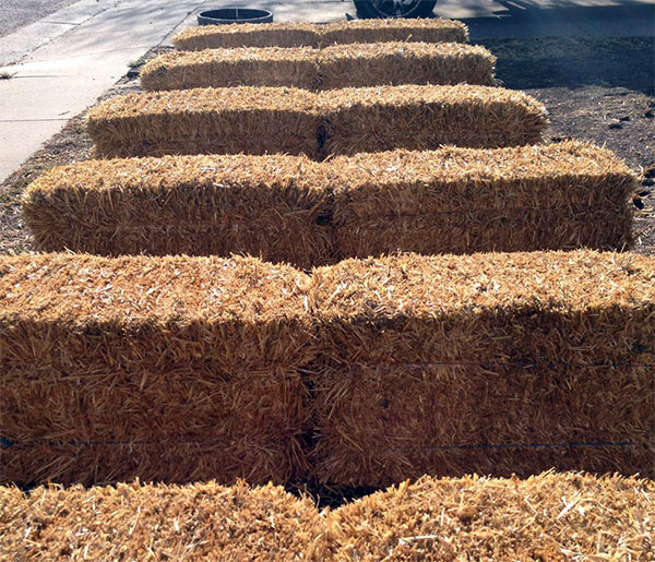 12 straw bales laid out and ready for conditioning in the front yard