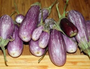 Eggplant Encounters