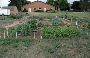 Community Garden Update, June 2011