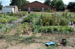 August Community Garden Update
