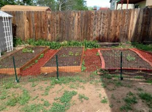 How My Garden Grows: End of May 2014